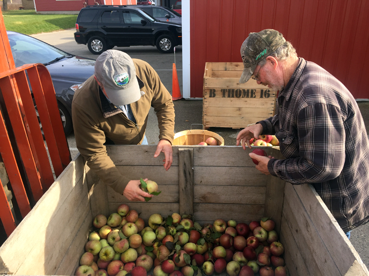 men checking apples
